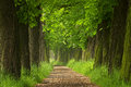 The Old Chestnut Alley Stock Image - 40975581