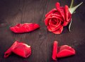 Red Rose With Petals On Old Wood, Old Style, Background, Valentine Day And Love Concept Stock Photos - 40977943