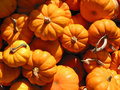 Mini Pumkins Royalty Free Stock Image - 416536