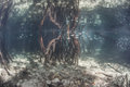 Mangrove Forest Royalty Free Stock Photos - 41047268