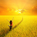 Happy Woman Jumping In Yellow Rice Field And Sunset Royalty Free Stock Photos - 41060368