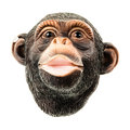 Ape Head Royalty Free Stock Images - 41065369