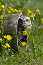 Burrowing Owl Stock Images - 41073414