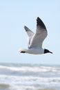 Flying Seagull Royalty Free Stock Photos - 41076368