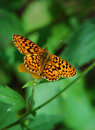 Butterfly Royalty Free Stock Image - 4112706