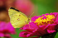 Butterfly Stock Images - 4119284