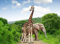 Giraffe And Elephants Stock Images - 41118524