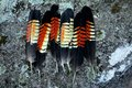 Australia: Collection Of Glossy Black Cockatoo Feathers Royalty Free Stock Photo - 41121615