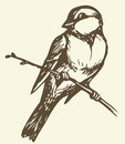 Vector Drawing. Small Titmouse On A Branch Stock Image - 41133461