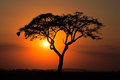 Sunset With Silhouetted Tree Stock Photos - 41168473