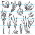 Set Of Onions Royalty Free Stock Images - 41168969