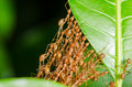 Red Ants Build Home Royalty Free Stock Images - 41172529