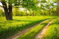 Road, Path, Way, Lane In Summer Green Forest Stock Photography - 41176892