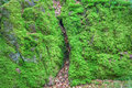 Moss Covered Rock Stock Photos - 41189823