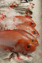 Fresh Raw Fish On Fishmonger S Slab Stock Photos - 4124613