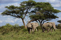 Family Of African Elephant Stock Images - 41206274
