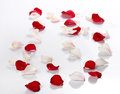 Lots Of Rose Petals Over White Stock Images - 41225274