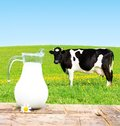 Cow On A Green Meadow. Royalty Free Stock Photo - 41225965