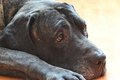 Detail Of The Head Of The Old Dog Stock Image - 41237891