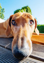 Funny Dog With Long Nose Stock Photography - 41238622