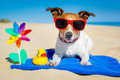 Dog At Beach Royalty Free Stock Photo - 41242455