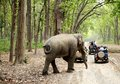 Game Drive At Jim Corbett Stock Photography - 41248122