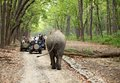 Game Drive At Dhikala Forest Of Jim Corbett Stock Image - 41248181