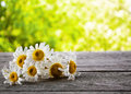 Bouquet Of Daisies Royalty Free Stock Image - 41290636