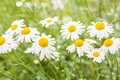 Wild Flowers Stock Images - 41291294