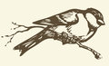 Vector Drawing. Small Titmouse On A Branch Royalty Free Stock Photo - 41323365