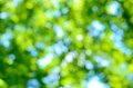 Blurred Forest Background Royalty Free Stock Images - 41346239