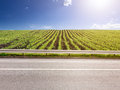 Side View Of Empty Asphalt Road And Corn Crops Stock Images - 41349334