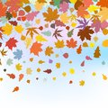 Beautiful Autum Leaves Against Sky. EPS 8 Royalty Free Stock Photography - 41375717