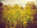 Beauty Meadow. Royalty Free Stock Images - 41392159