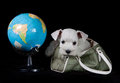 Puppy With Globe Stock Photo - 41395630