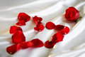 Red Rose  Stock Photography - 4141882