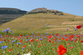 Castelluccio Di Norcia Royalty Free Stock Photos - 4146158