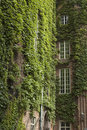 Ivy Covered Buildings Royalty Free Stock Images - 4146889