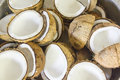 Fresh Coconuts Stock Images - 41430994