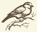 Vector Drawing. Small Titmouse On A Branch Stock Images - 41441454