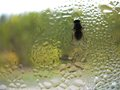 Window Glass, Fly And Rain Drops Stock Images - 41444694