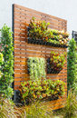 Vertical Garden Royalty Free Stock Image - 41455796