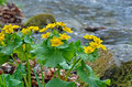Flowers At River 6 Royalty Free Stock Images - 41469979