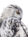 Isolated Black And White Owl Royalty Free Stock Photo - 41473955