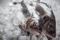 Sea Bass On Ice Royalty Free Stock Images - 41481549