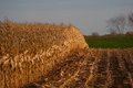 Late Summer Corn Field Stock Images - 41481944