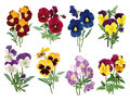 Set Of Multicolored Pansies Stock Images - 41501074