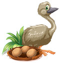 An Ostrich Beside The Nest With Eggs Royalty Free Stock Images - 41503509