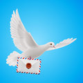 Dove White Stock Photography - 41519122