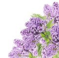 Blooming Lilacs  Corner Border, Isolated Royalty Free Stock Photo - 41524035